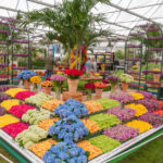 RHS Chelsea Flower Show